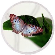 White Peacock Butterfly 2 Round Beach Towel