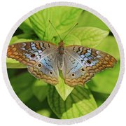 White Peacock Butterfly I Round Beach Towel