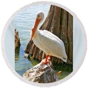 White Pelican By Cypress Tree Round Beach Towel