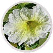 White Petunia - Solanaceae Round Beach Towel