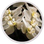 White Phalaenopsis Blossom Round Beach Towel