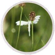 White Plume Moth, Round Beach Towel