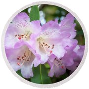 White Rhododendron Flowers With A Purple Fringe Round Beach Towel