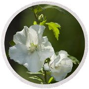 White Rose Of Sharon Squared Round Beach Towel