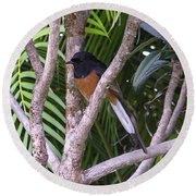 White Rumped Shama Round Beach Towel