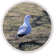 White Seagull Round Beach Towel