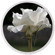 White Simplicity Rose Profile Round Beach Towel