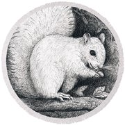 White Squirrel Round Beach Towel