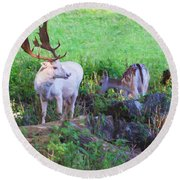 White Stag And Hind Round Beach Towel
