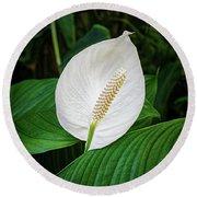 White Tail-flower Round Beach Towel