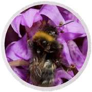 White-tailed Bumblebee On Southern Marsh Orchid Round Beach Towel