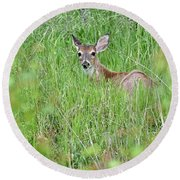 White-tailed Deer Bedded Down In Tall Grass Round Beach Towel