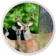 White-tailed Deer Family Round Beach Towel