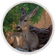 White-tailed Deer H1829 Round Beach Towel