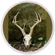 White-tailed Deer Skull In The Woods Round Beach Towel
