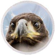 White-tailed Eagle #2 Round Beach Towel