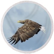 White-tailed Eagle Against Clouds Round Beach Towel