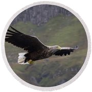 White-tailed Eagle Approaches Round Beach Towel