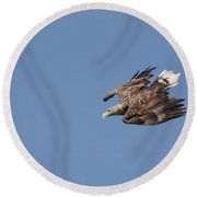 White-tailed Eagle Diving Round Beach Towel