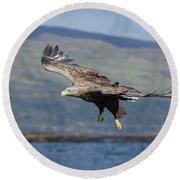 White-tailed Eagle Over Loch Round Beach Towel