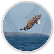 White-tailed Eagle Over The Sea Round Beach Towel