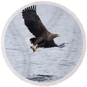 White-tailed Eagle With Catch Round Beach Towel