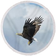White-tailed Eagle With Fish Round Beach Towel
