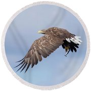 White-tailed Eagle With Lunch Round Beach Towel