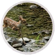 White-tailed Fawn At Vichy Springs Resort In Ukiah Round Beach Towel