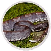 White-tailed Hognose Viper Round Beach Towel