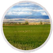 White Tails In The Field Round Beach Towel