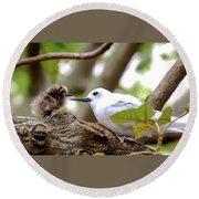 White Terns Koa And Parent...bird Love Round Beach Towel