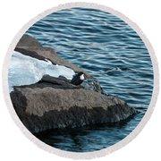 White-throated Dipper Nr 3 Round Beach Towel