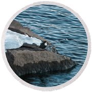 White-throated Dipper Nr 4 Round Beach Towel