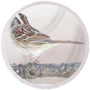 White-throated Sparrow Looking Skyward Round Beach Towel