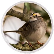 White Throated Sparrow On Branch New Jersey Round Beach Towel