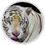 White Tiger Closeup Round Beach Towel