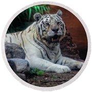 White Tiger Gladys Porter Zoo Texas Round Beach Towel