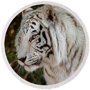 White Tiger Portrait 2 Round Beach Towel