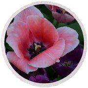 White Tip Pink Tulip Round Beach Towel