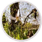 White Trout Lily Round Beach Towel