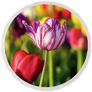 White Tulip Flower With Pink Stripes Round Beach Towel