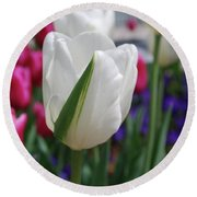 White Tulip With A Green Stripe In A Garden Round Beach Towel