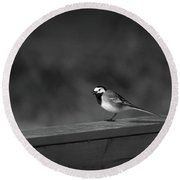 White Wagtail 1 In Bw Round Beach Towel
