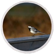 White Wagtail 1 Round Beach Towel
