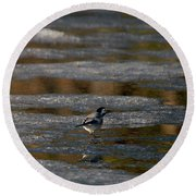 White Wagtail 4 Round Beach Towel