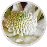 White Waratah Round Beach Towel
