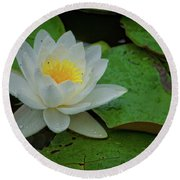 White Water Lily Round Beach Towel