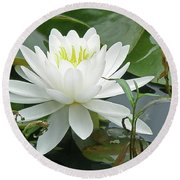 White Water Lily Wildflower - Nymphaeaceae Round Beach Towel