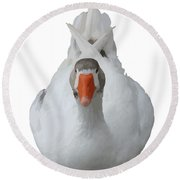 White Wild Duck Sitting Background Removed Round Beach Towel